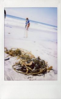 Beach_seaweed